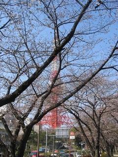 ベストポジション_東京タワーと桜.jpg