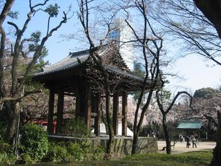 増上寺境内と桜.jpg